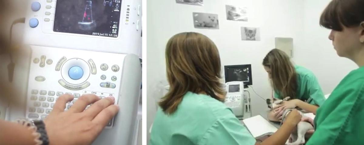 ecocardiografia_site